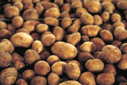 Potato Farmers Get 22.5 metric tonnes Improved Potato Seeds