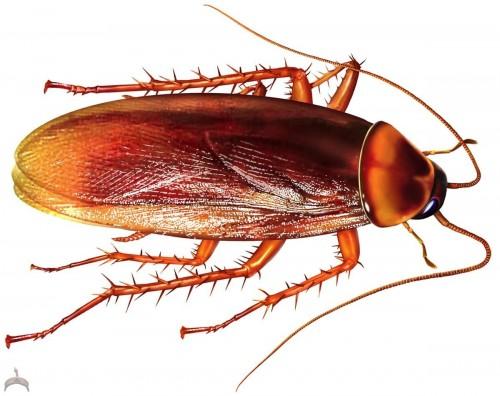 cockroach-06