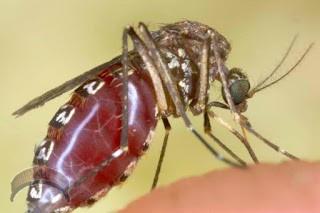 efon-zika