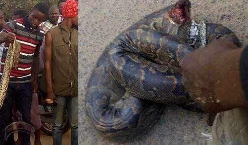 big python killed in ijebu ode