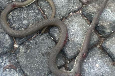 snakes killed