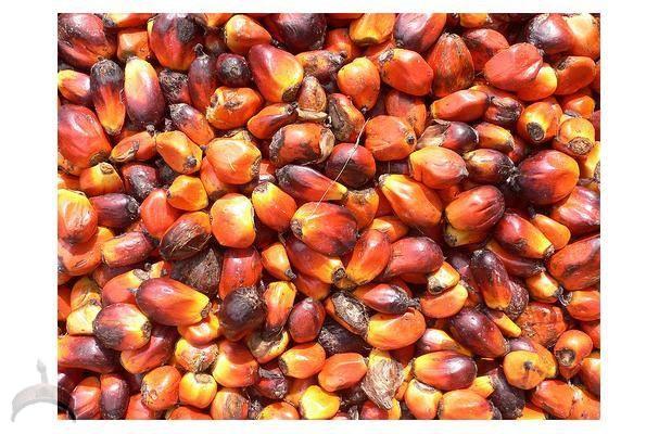 palm kernel in yoruba