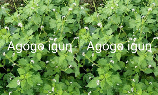 ogbeyonu - agogo igun