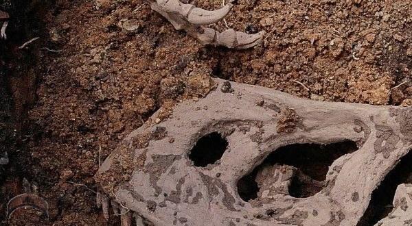 Photos: Dinosaurs Bones found in Mowe, Lagos