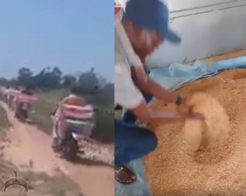 rice importation nigeria
