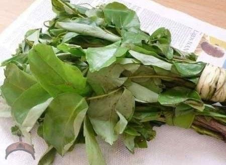oha leaves