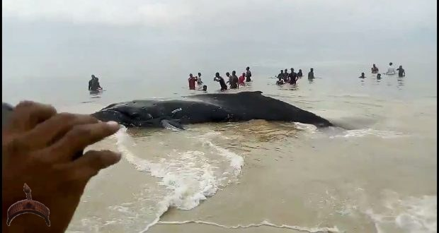 Whale found in sierra Leone